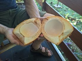 Buli_2016_03_06_coconut_inside