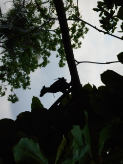 Bat on Plun Island
